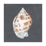 Shell on Slate I Posters by Megan Meagher