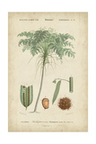 Tropical Botanique IV Prints by  Vision Studio