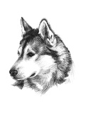 Canine Study III Prints by Ethan Harper