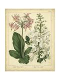 Sydenham Edwards - Garden Flora IV - Art Print