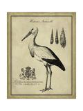 Antiquarian Stork Posters par  Vision Studio
