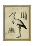 Antiquarian Stork Posters by  Vision Studio