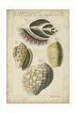 Vintage Shell Study I Poster af Martini