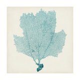 Sea Fan III Giclee Print by  Vision Studio