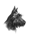 Canine Study II Plakaty autor Ethan Harper