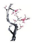Plum Blossom Branch I Wydruk giclee premium autor Nan Rae