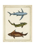 Antique Rays and Fish III Giclee Print by Chevillet