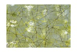 String Theory IV Giclee Print by Jennifer Goldberger