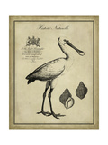Antiquarian Spoonbill Prints by  Vision Studio