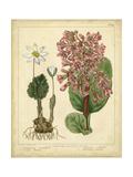 Garden Flora III Posters by Sydenham Edwards