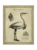 Antiquarian Egret Art by  Vision Studio