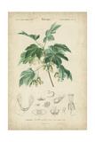 Tropical Botanique VIII Prints by  Vision Studio