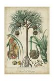 Palma Exotica I Poster von  Vision Studio