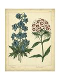 Garden Flora II Plakater af Sydenham Edwards