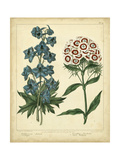 Garden Flora II Prints by Sydenham Edwards