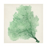 Sea Fan VII Giclee Print by  Vision Studio