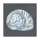Shell on Slate VIII Prints by Megan Meagher