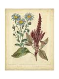Garden Flora I Posters by Sydenham Edwards