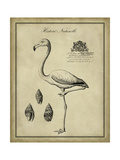 Antiquarian Flamingo Posters by  Vision Studio