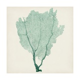 Sea Fan I Giclee Print by  Vision Studio