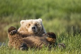 Grizzly Bear Resting on Back in Meadow at Hallo Bay Photographic Print by Paul Souders