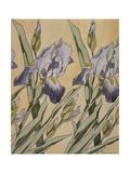 Iris Giclee Print by Kolomon Moser