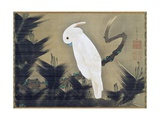 White Cockatoo on a Pine Branch Giclée-tryk af Ito Jakuchu