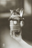 Kitten in a Beer Stein Photographic Print