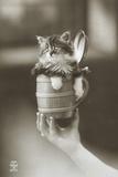 Kitten in a Beer Stein Photographic Print