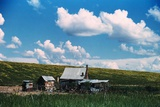 Sharecropper's Homestead Photographic Print by Marion Post Wolcott