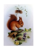 Red Squirrel with Primroses and Violets Giclee Print by Edward Julius Detmold