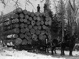 Horses Hauling Huge Load of Logs Stampa fotografica di W.G. Hopps