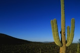 Cactus at Sunrise Photographic Print by Paul Souders