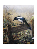 A Magpie Observing Fieldmice Giclee Print by Johan Gerard Keulemans