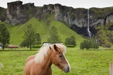 Icelandic Horse Near Waterfall Photographic Print by Paul Souders