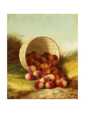 Peaches in a Basket Giclee Print by Carducius Plantagenet Ream