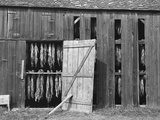Tobacco Shed Photographic Print by John Collier