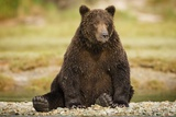Brown Bear Sitting on Gravel Bar at Kinak Bay Photographic Print by Paul Souders