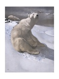 Polar Bears in Snow Giclee Print by Carl Ederer