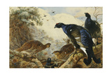 Blackgame Giclee Print by Archibald Thorburn