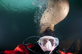 Steller Sea Lion Biting Head of Photographer Paul Souders Photographic Print by Paul Souders