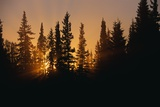 Midnight Sun and Forest Along Alaska Highway Photographic Print by Paul Souders