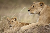 Lioness with Cub in Masai Mara National Reserve Photographic Print by Paul Souders