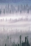 Misty Forest Near Mount Brooks Photographic Print by Paul Souders