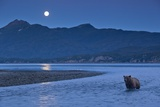 Brown Bear and Full Moon, Katmai National Park, Alaska Photographic Print by Paul Souders