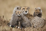 Cheetah with Cubs in Masai Mara National Reserve Photographic Print by Paul Souders