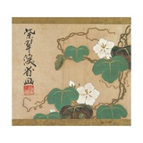 Evening Glories Giclee Print by Ogata Kenzan