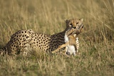 Cheetah with Baby Thomson's Gazelle Photographic Print