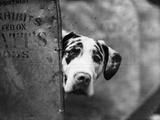 Zastur of Sudbury Peeking around Corner Photographic Print