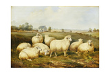 Sheep in a Meadow Giclee Print by James Charles Morris